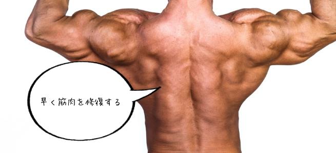 早く筋肉を修復する